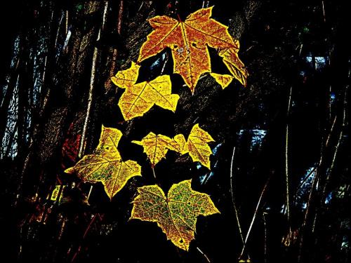 Jeszcze trochę złotej jesieni...