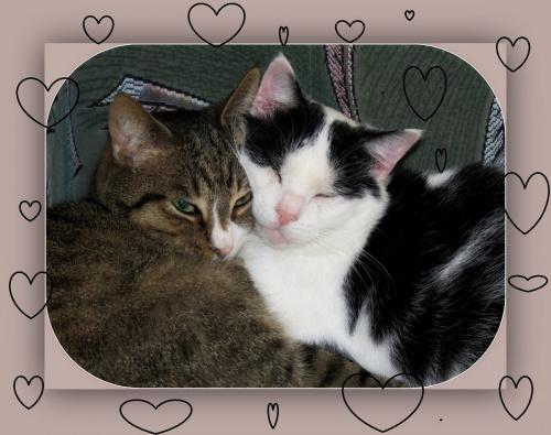 Z okazji zbliżających się Walentynek życzę wszystkim dużo Miłości, Miłości i jeszcze raz Miłości !!!