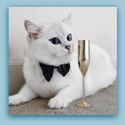 Foto z Internetu; nie mogłam się oprzeć, żeby go tu nie pokazać...;-))) Wszystkim fotosikowym Mruczkom wszystkiego najlepszego z okazji Dnia Kota !