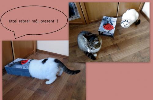 17 lutego obchodzony jest Międzynarodowy Dzień Kota. Z tej okazji moje kotki składają wszystkim fotosikowym koteczkom i kocurkom najserdeczniejsze życzenia !