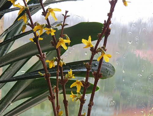Wiosna potrzebna od zaraz !