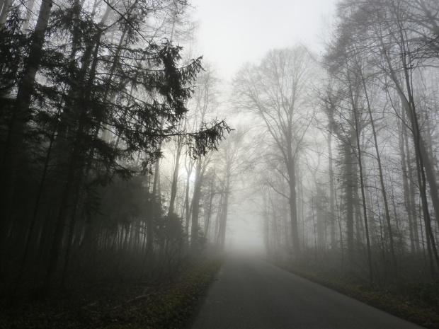 mgla w lesie