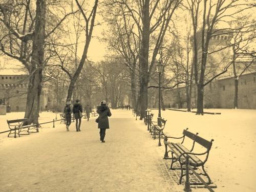 Planty krakowskie zimą