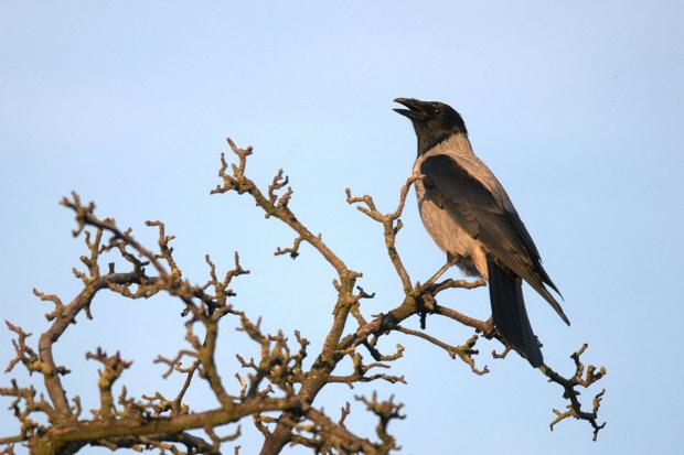 Do mnie takie ptaszęta przylatują na orzechy :)