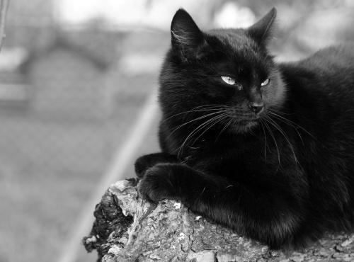 Jeden z dwóch moich kotów . Kicia jest mamą drugiego czarnuszka.Przyplątała się i została razem z synkiem.