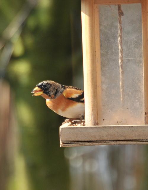 Ptaki w moim ogrodzie #ptaki #wiosna