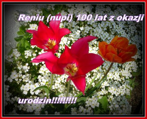 Reniu, wszystkiego najlepszego, zdrowia, szczęścia, spełniania wszelkich marzeń , spokoju i radości z każdego dnia :)