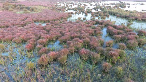 Uroczysko zwane Bagnem Bubnów - ostoja ponad 90 gatunków ptaków
