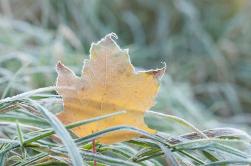Mroźny oddech jesieni