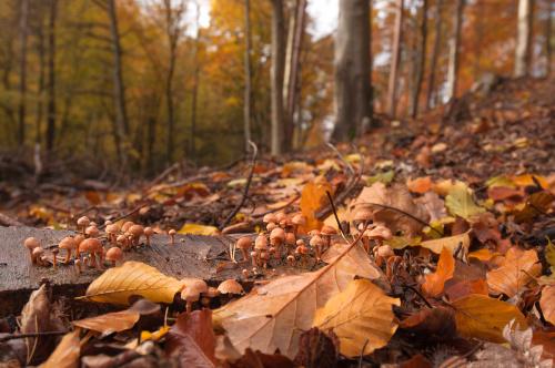Jesienny marsz