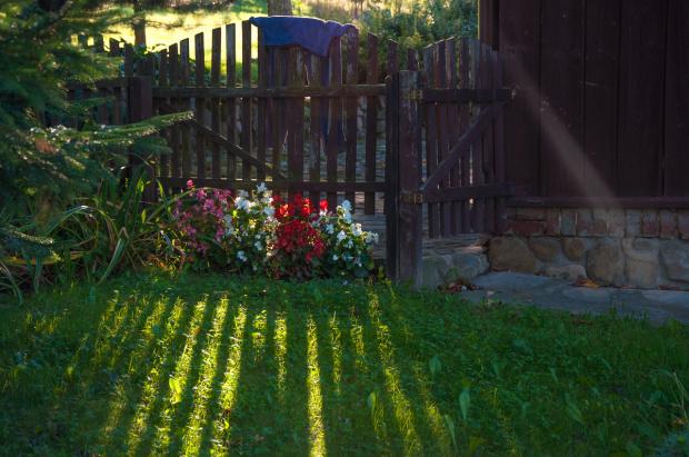 W moim ogródku