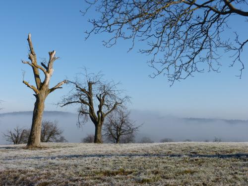 z mgłą w tle