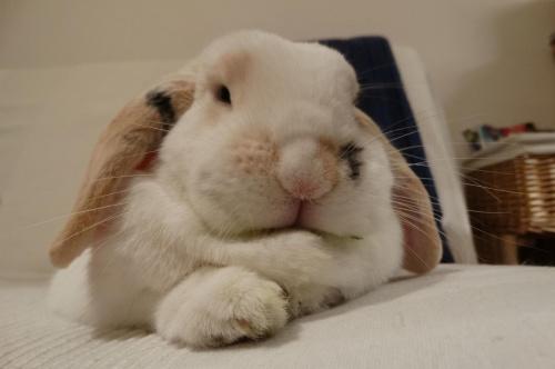 Jutro druga rocznica adopcji Lolka :)
